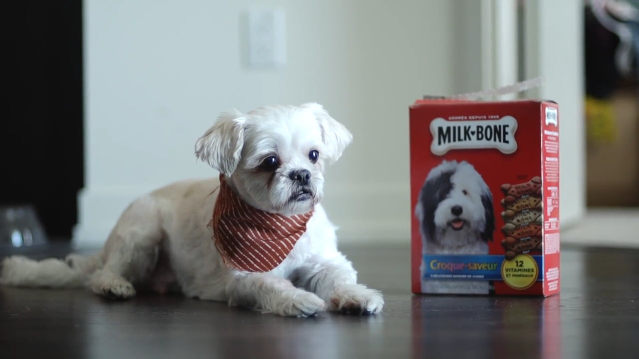 cover milk bone
